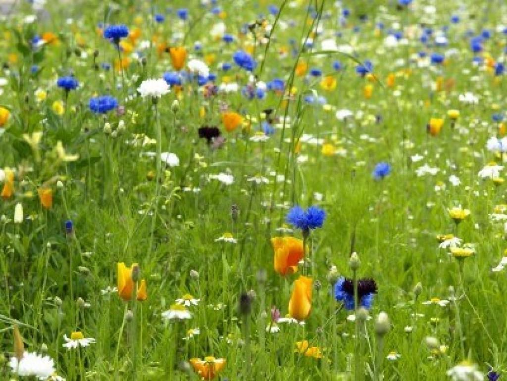 14971881-wild-flower-in-a-garden