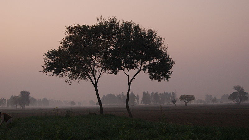 800px-Evening_rukhala_two_trees